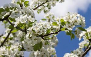 White Petaled Flower - скачать обои на рабочий стол