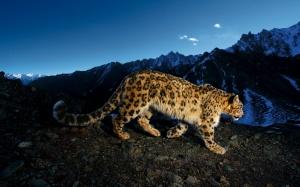 Leopard Under Blue Sky - скачать обои на рабочий стол