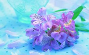Desktop Wallpaper: Purple Lilly Flower