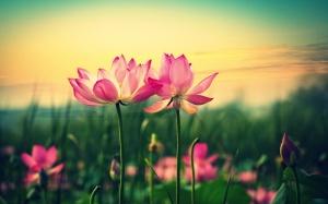 Desktop Wallpaper: Pink Flower