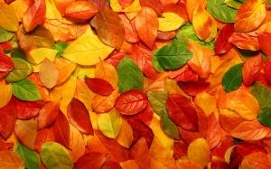 Desktop Wallpaper: Green And Orange Lea...