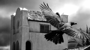 Desktop Wallpaper: Blacka Bird Flying I...