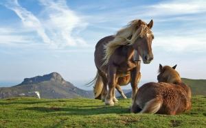 Desktop Wallpaper: 2 Horse In Field Dur...