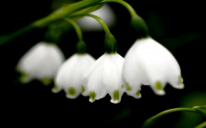 Desktop Wallpaper: White Flower With Gr...