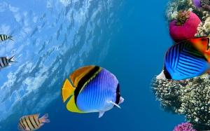 Desktop Wallpaper: Fish Under The Sea D...