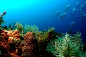 Desktop Wallpaper: School Of Fish Near ...