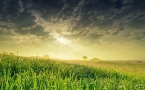 Desktop Wallpaper: Green Meadow During ...