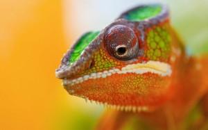 Desktop Wallpaper: Green Orange And Bei...