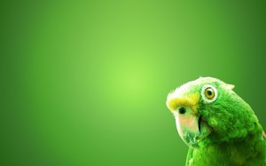 Desktop Wallpaper: Green Parakeet