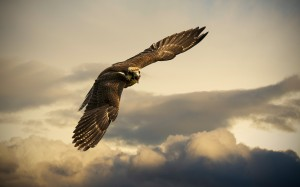 Desktop Wallpaper: Brown Bird Flying Un...