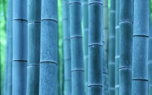Desktop Wallpaper: Bamboo Tree
