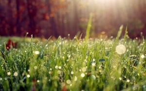 Desktop Wallpaper: Green Grass