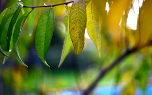Desktop Wallpaper: Green And Brown Leaf