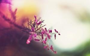 Desktop Wallpaper: Purple Petaled Flowe...