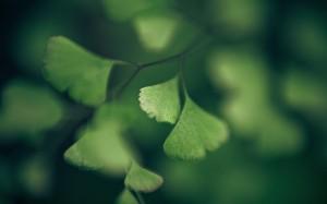 Desktop Wallpaper: Green Leaves