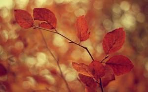 Desktop Wallpaper: Orange Leaves During...