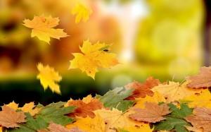 Desktop Wallpaper: Yellow Maple Leaf