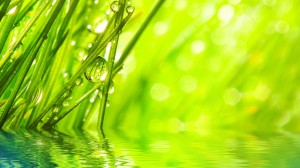 Desktop Wallpaper: Green Plant Stem On ...