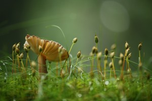 Desktop Wallpaper: Brown Mushroom In Mi...