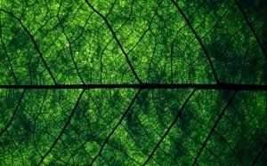 Desktop Wallpaper: Green And Black Leaf