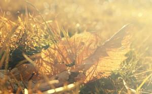 Desktop Wallpaper: Brown Grass