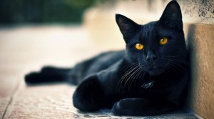 Desktop Wallpaper: Black Cat Lying On B...