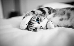 Desktop Wallpaper: Tabby Cat In Graysca...