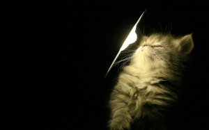 Desktop Wallpaper: Black Table Lamp Bes...