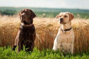 Desktop Wallpaper: Two Dog Sitting In F...