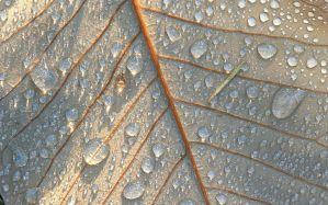 Desktop Wallpaper: Grey leaf