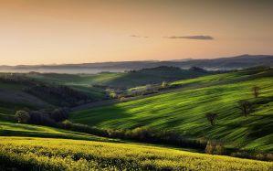 Desktop Wallpaper: Green grass field pa...