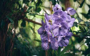 Desktop Wallpaper: Purple flower