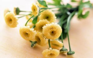 Desktop Wallpaper: Yellow flower