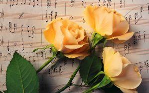 Desktop Wallpaper: Yellow petal flower