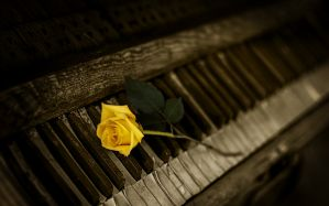 Desktop Wallpaper: Yellow rose