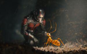 Desktop Wallpaper: Ant man