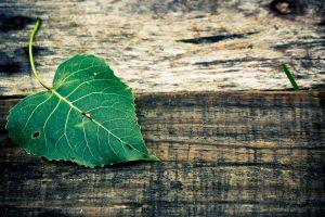 Desktop Wallpaper: Green heart leaf