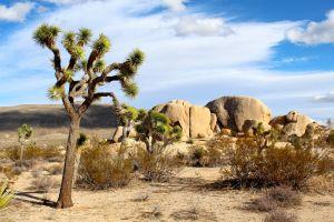 Desktop Wallpaper: Desert tree