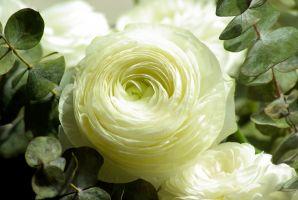 Desktop Wallpaper: White petaled flower