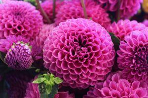Desktop Wallpaper: Pink petal flower