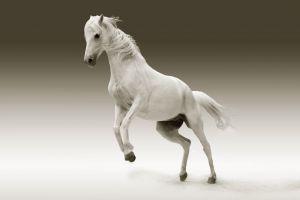 Desktop Wallpaper: Picture of white hor...