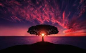 Desktop Wallpaper: Amazing tree