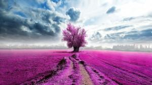 Desktop Wallpaper: Purple leafed tree