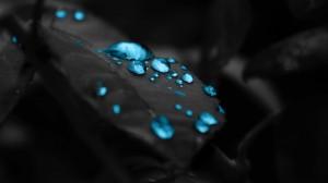 Desktop Wallpaper: Micro lens water dro...