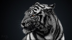 Desktop Wallpaper: White tiger
