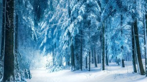 Desktop Wallpaper: Snow forest beside t...