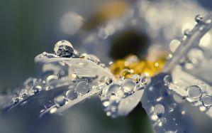 Desktop Wallpaper: Water droplets