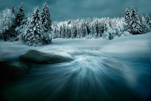 Desktop Wallpaper: Snow covered trees i...