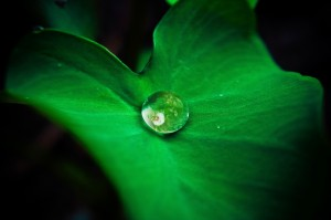 Desktop Wallpaper: Water droplet