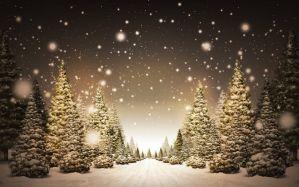Trees covered in snow illustration - скачать обои на рабочий стол
